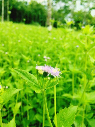 สวัสดีวันพุธ Flower Green Color Beauty In Nature Nature Photo Hello World Relaxing Morning Happy Wednesday
