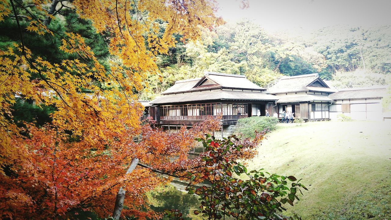autumn, change, leaf, tree, architecture, built structure, house, day, nature, building exterior, outdoors, scenics, tranquility, no people, beauty in nature, tranquil scene, plant, forest, landscape, growth, mountain, sky