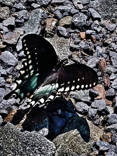 Nature Butterfly Wonderland Butterfly Encounter Butterfly Closeup Butterfly Wings No People Outdoors Day NatureClose-up