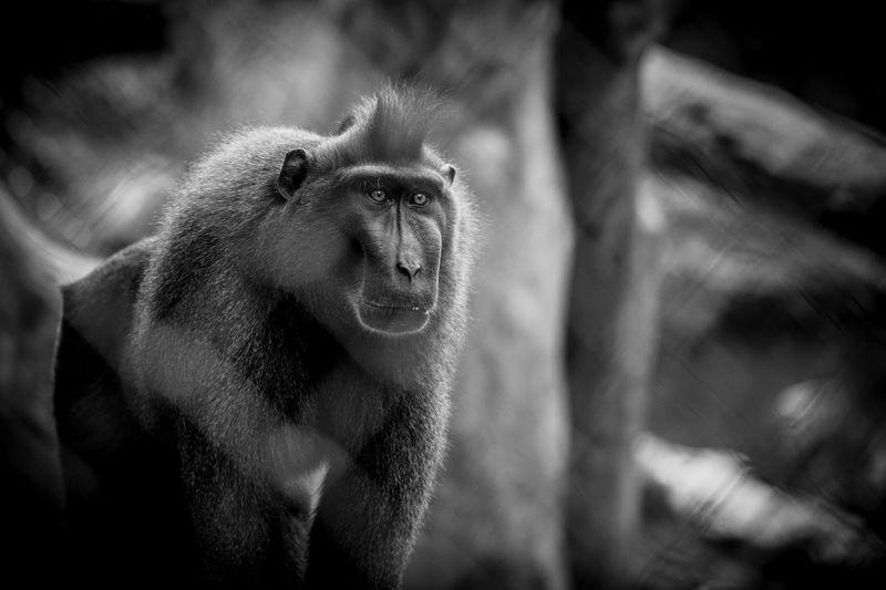 Extreme close-up of monkey