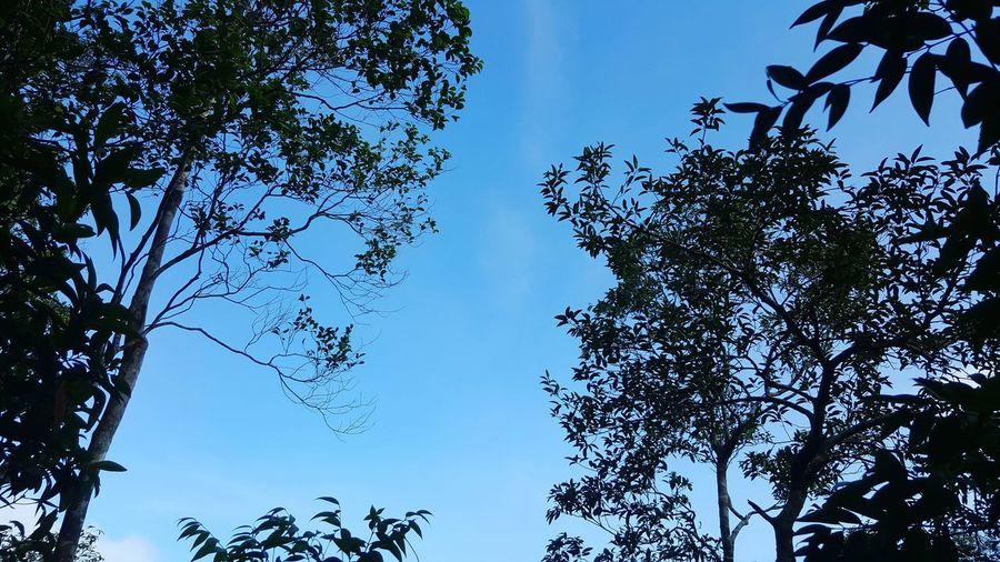 Beauiful tree