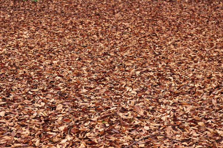 High angle view of dry leaves on land