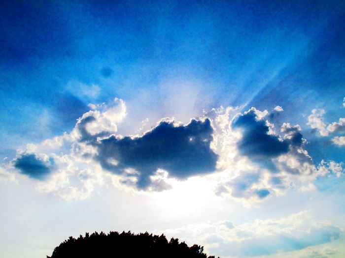 Sky_collection Sun Sun Rays Amazing_captures Clouds Sky Amaizing Tree Big Tree Blue Shadow