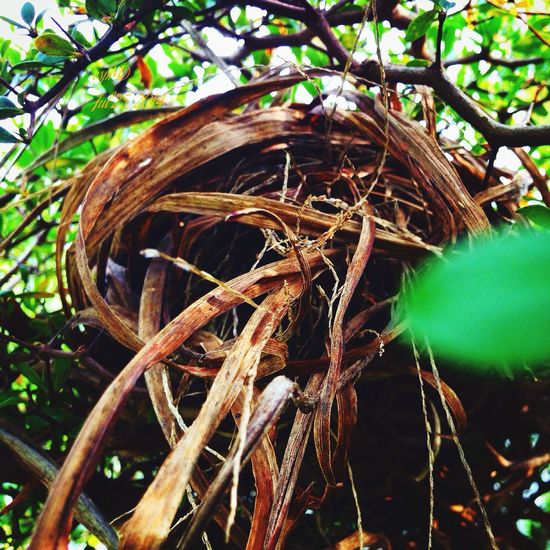 Nature Bird Nest in our garden.