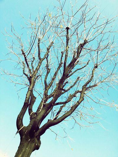 韓國不冷,但這顆樹樹葉卻掉光了……