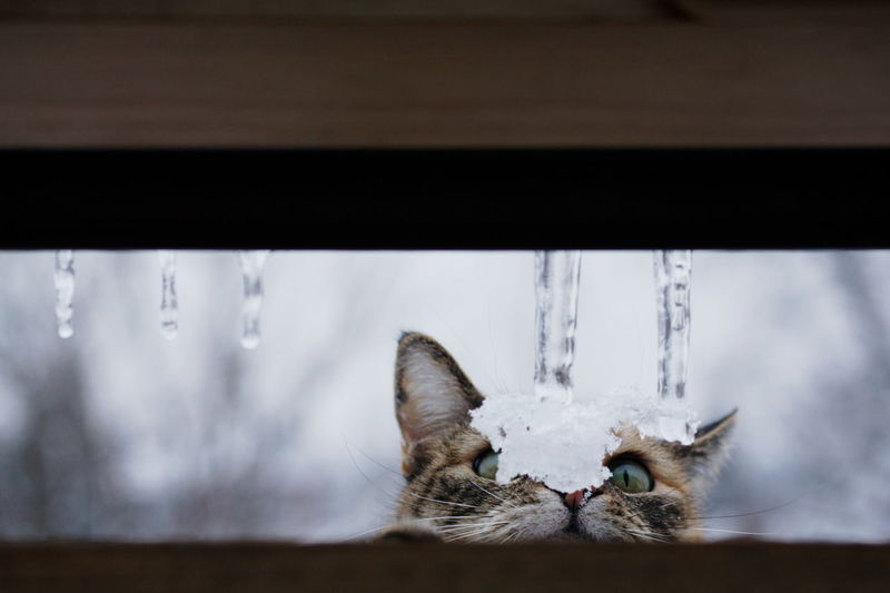 Snow on cat during winter