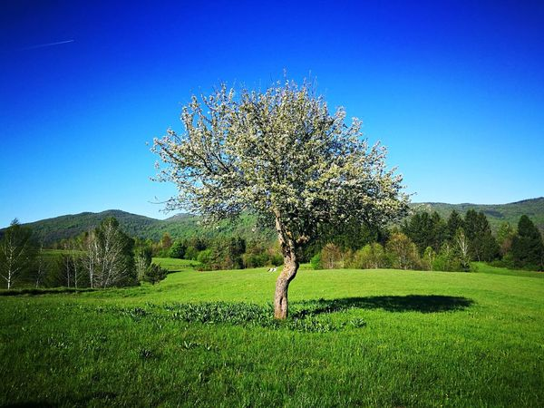 Grass Growth Nature Beauty In Nature Blue Tree Outdoors Day No People Sky Freshness