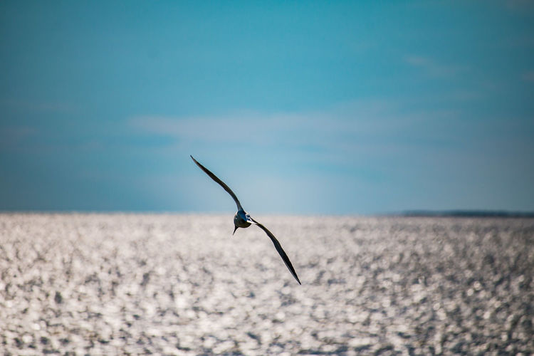 Single seagull over the sea in the blue sky