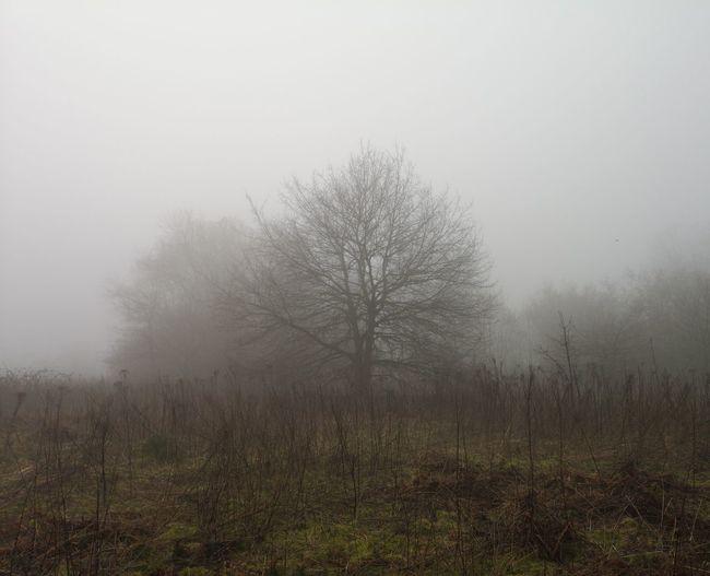 An Atmospheric