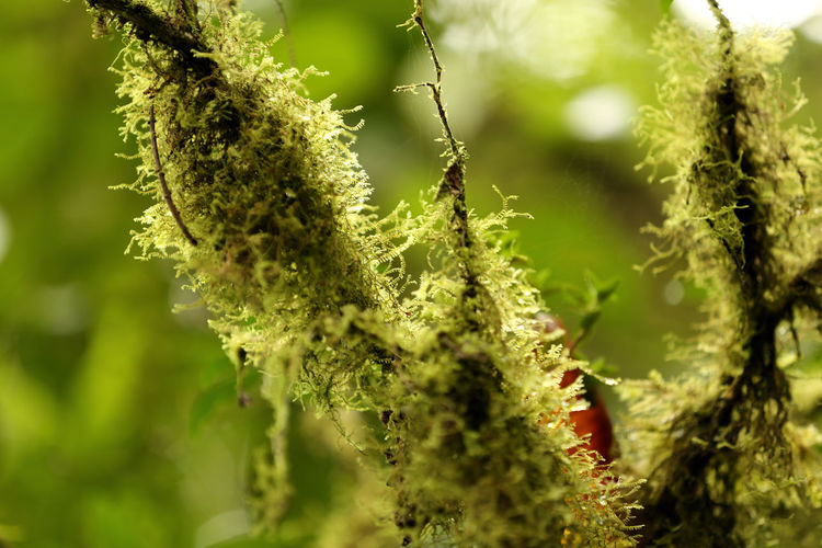 Tapantí National Park Beauty In Nature Close-up Focus On Foreground Freshness Green Color Growth Nature No People Plant