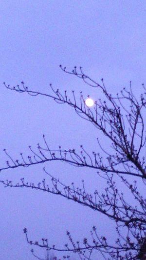 luna piena Rami Luna Cielo Contrasto