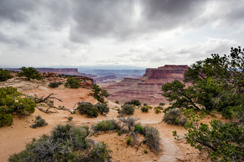 Beauty In Nature Canyonlands National Park, Utah Cloud - Sky Day Landscape Nature No People Outdoors Scenics Sky Storm Cloud Travel Destinations Tree
