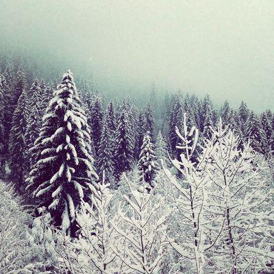 France Chatél Snow Frozen Alps Portes Du Soleil Trees Woods Winter Skiing
