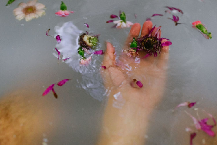 Close-up of pink flower in water