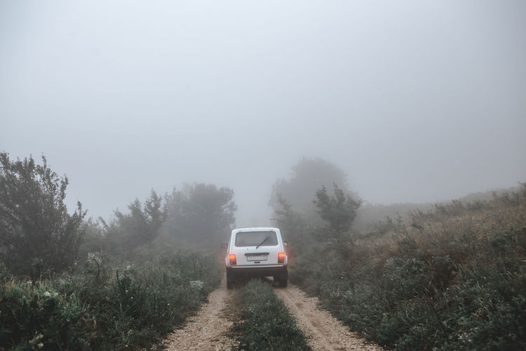 Cars On Road In Forest During Foggy Weather