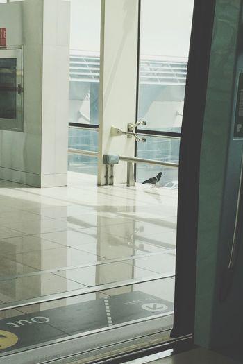 Metrostation Bird MyDubai ❤