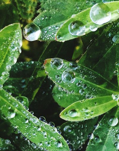 Morning dew Drop Water Leaf Wet Green Color Close-up Water Drop Droplet Nature RainDrop Freshness Growth No People Beauty In Nature Plant Purity Fragility Outdoors Day Animal Themes