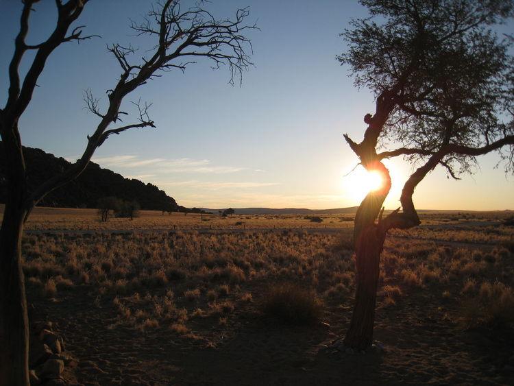 Africa Beauty In Nature Landscape Namib Desert Namib Naukluft National Park Namibia Sossusvlei Steppe Sunset Travel Travel Photography Veld Landscapes With WhiteWall The Great Outdoors - 2016 EyeEm Awards 43 Golden Moments
