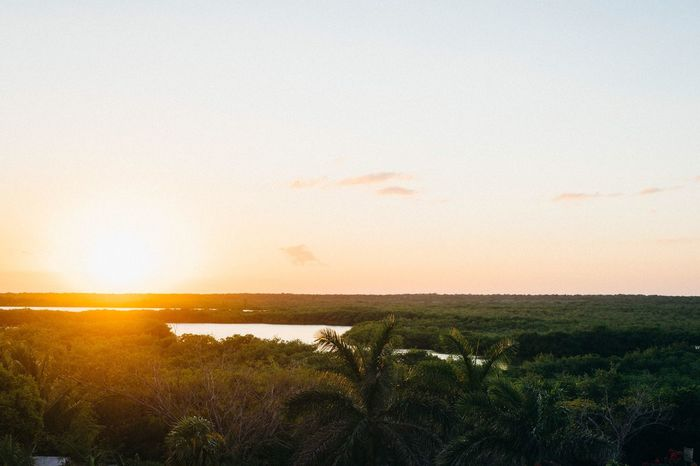 Nature Sunset Scenics Beauty In Nature Growth Tranquil Scene Sea Tranquility Clear Sky Outdoors No People Sky Mangrove Forest Water Grass Beach Horizon Over Water Day