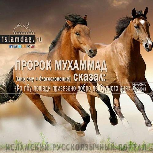 Исламдаг