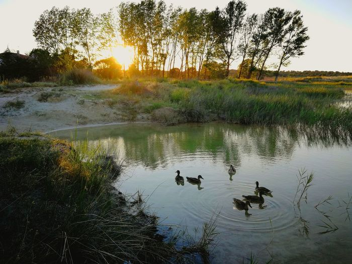 HUAWEI Photo Award: After Dark Bird Tree Water Swimming Lake Sunset Alligator Reflection Water Bird Sky Duck Swimming Animal