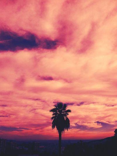 Clouds Sky Barcelona Pink Phoenix Palms Skyporn