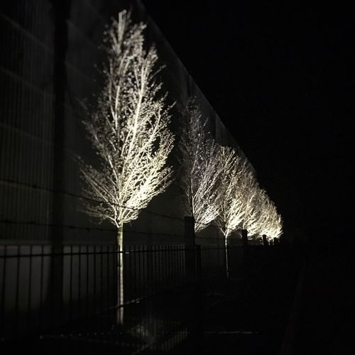 White Trees. Night Illuminated No People Outdoors Sky Long Exposure Clear Sky Low Angle View Nature Architecture Tree