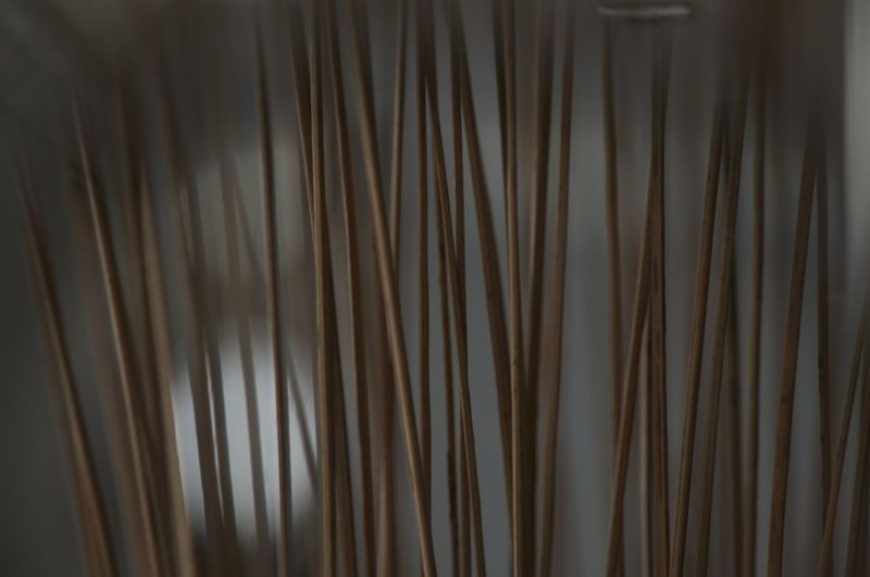 Backgrounds Close-up Curtain Day Indoors  Nature No People The Lops