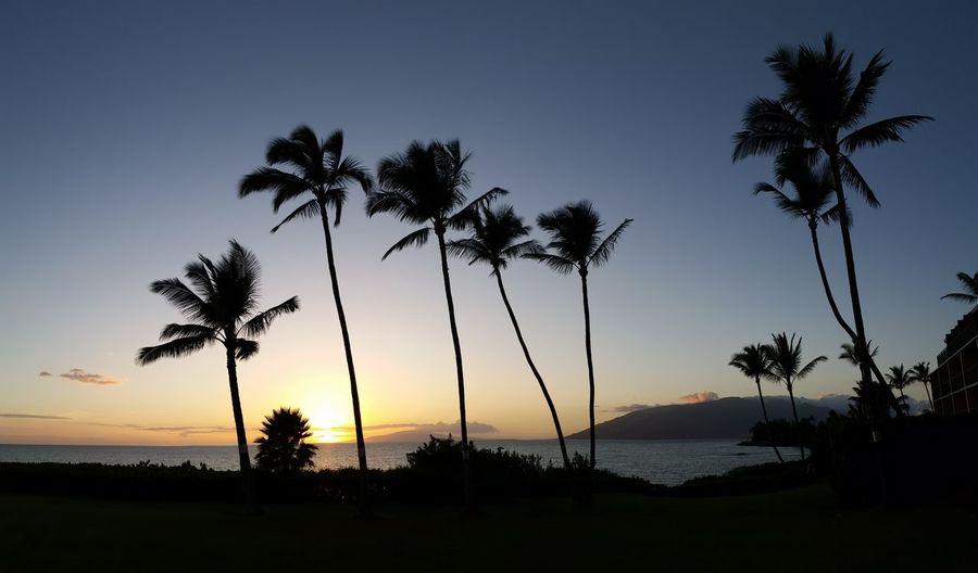 Kihei Maui Sunset Hawaii Maui Aloha Hawaiian Islands Hawaii Life Mauinokaoi Sunset Travel Destinations Landscape Beach Kihei South Maui Travel Backgrounds Palm Trees Tree Water Palm Tree Sunset Tree Trunk Beach Silhouette Sea Coconut Palm Tree Tropical Tree Tropical Climate Island