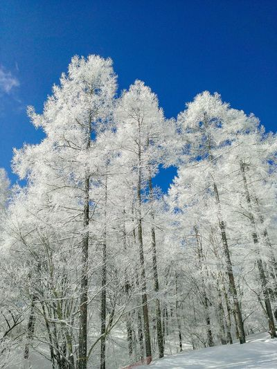 Hoarfrost 霧氷 雪 寒い 澄んだ空気 透明感 青空 Blue Backgrounds Snow Sky Close-up Snow Covered White Cold