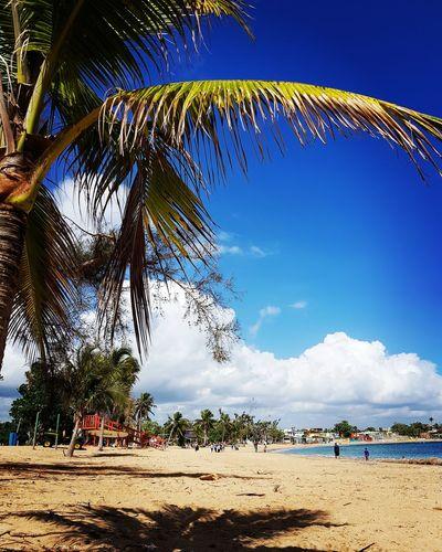 Tree Beach City Sand Sky Beach Umbrella Palm Tree Coconut Palm Tree Tropical Tree