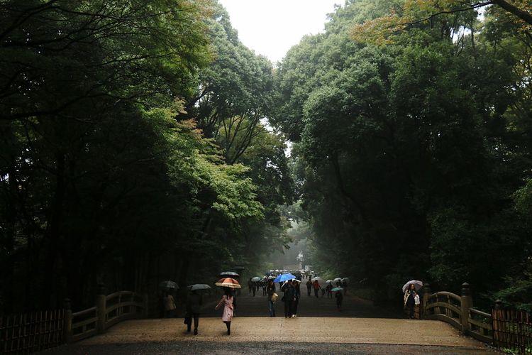 Urban Forest Urban Landscape Landscape_photography Japan Japanese Shrine Japanese Traditional 明治神宮 Rain Forest Rain 雨のおかげでより一層緑が薫ってました