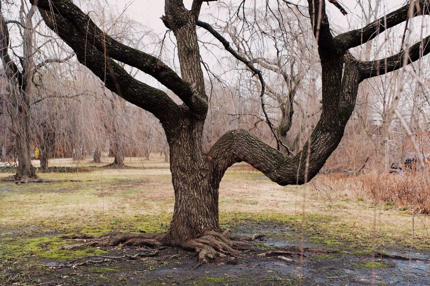 Urban Landscapes Tree Tree Trunk Bare Tree Branch Landscape Nature Deciduous Tree No People Day