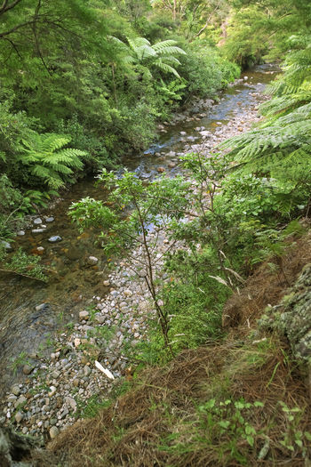 River and dense forest in New Zealand – Wentworth Valley, Coromandel, North Island, New Zealand Creek Creekside Freshness New Zealand Beauty New Zealand Scenery River View Riverside Tree Fern WoodLand Coromandel Peninsula Environment Exoticism Fern Flora Forest High Angle View Landscape Lush Foliage New Zealand No People River Stream Wentworth Wilderness Woods