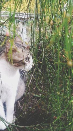 Cat Beautiful Animals Cute