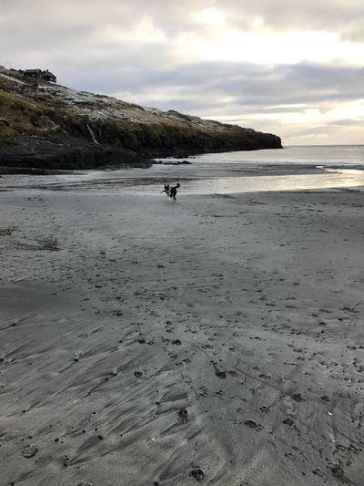 Dog on a cold beach Nature Sand Beach Dogslife