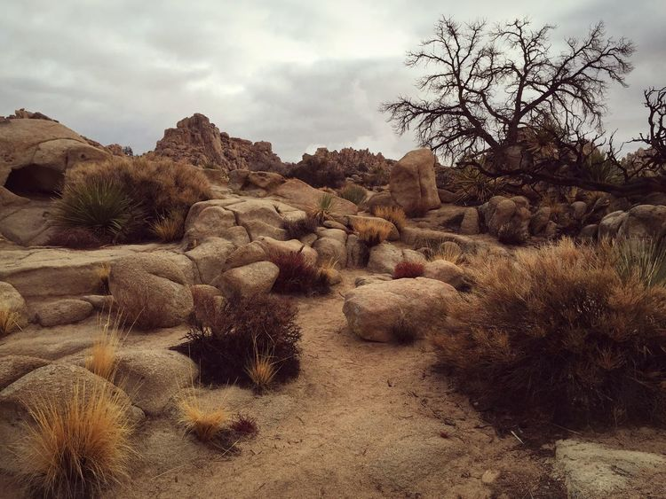 How Do You See Climate Change? The Hidden Valley Joshua Tree National Park Iphone6 Desert Landscapes With WhiteWall The KIOMI Collection