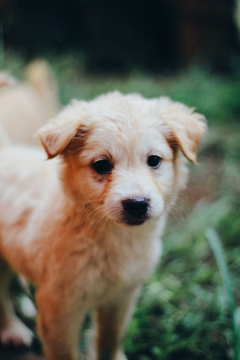 Dog Canine Domestic Mammal Pets Domestic Animals One Animal Portrait Focus On Foreground Looking At Camera Vertebrate Cute Close-up No People Day Young Animal Standing Small Snout