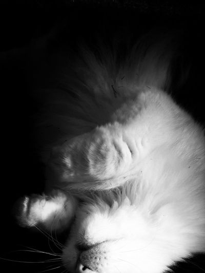 Welcome home my humansister. Blackandwhite Sleeping Cat Eye4photography  Bnw Cat