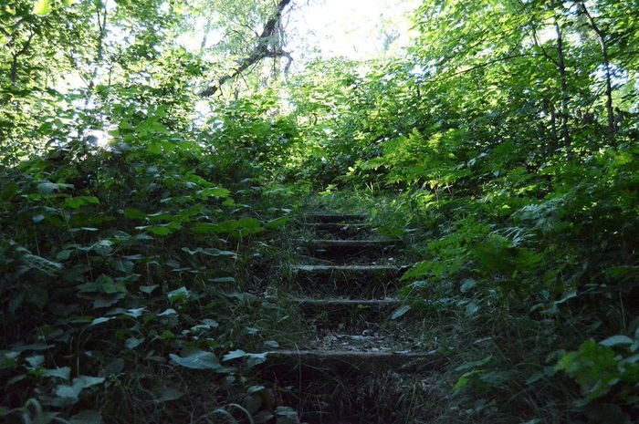 SeeingStairs In Nature is when my Imagination starts to wander. Where Does It Lead? What Lies Ahead? It doesn't matter how simple the real answer is. The joy lies in the Mystery that could be. Nature_collection Nature Naturelovers Stairs Stairs_collection Showcase July