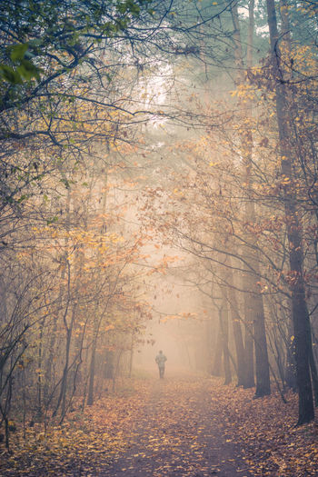 Running Autumn Fog Forest Leaf Nature One Person Outdoors Tree