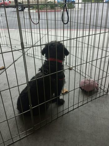 Doggy DogLove Homeless Homeless Dogs Homelessdog Adopt A Shelter Pet Shelterdogs Travis