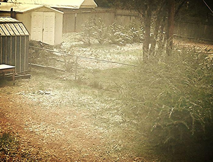 back yard. snow