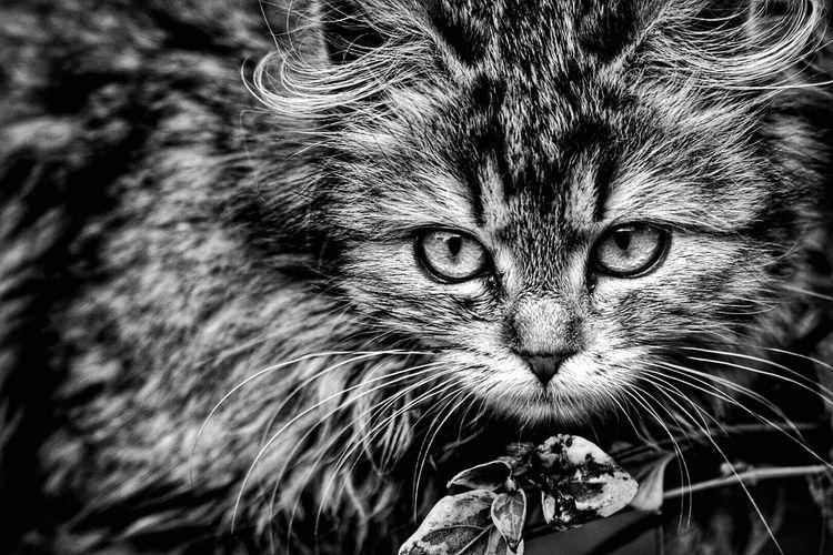 Monster in black and white. Cat Black & White Hunter Pet Pets Blackandwhite Furry Animal