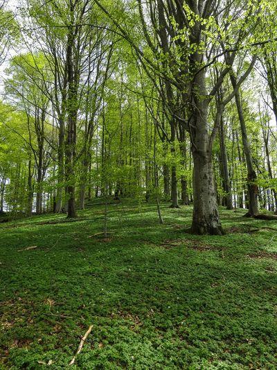 Trekking Nature Reserve Beech Forest