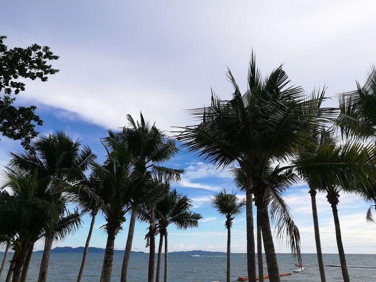ฟ้าและท้องทะเลกับลมนั้นมีอยู่... Tree Palm Tree Water Sea Beach Cloud - Sky Nature Social Issues Sky Blue Tropical Climate Scenics Beauty In Nature Growth Silhouette Horizon Over Water Vacations Landscape Tranquility Outdoors First Eyeem Photo