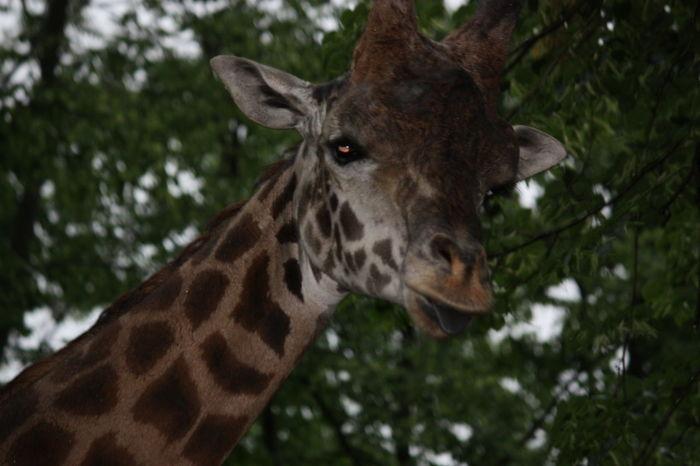 Animals Fauna Nature Pittsburgh Zoo Zoo Zoo Photography