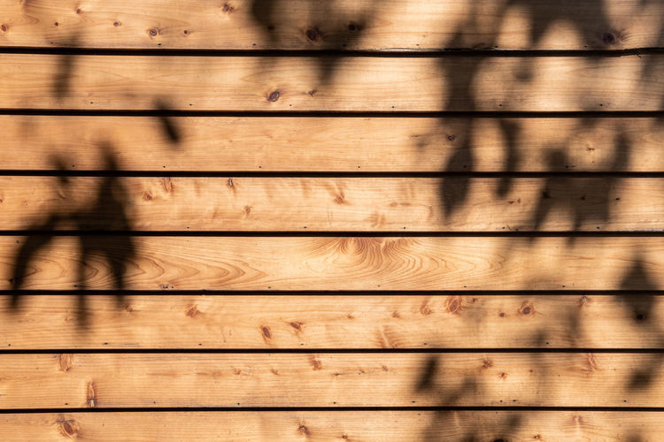 Reflection of tree on wooden wall outdoors