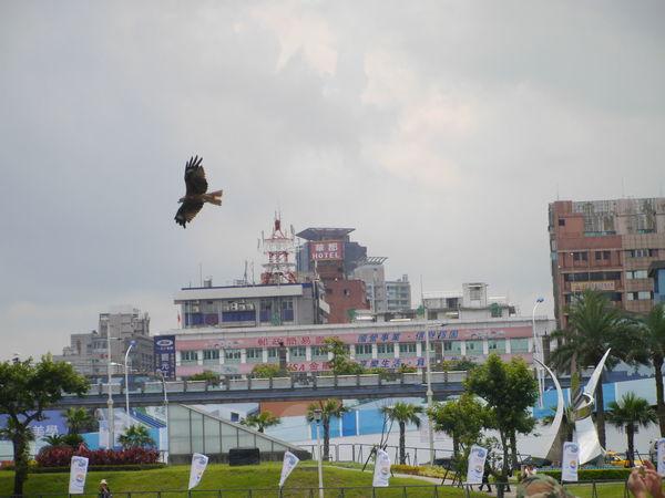 Eagle In Flight keelung Keelung
