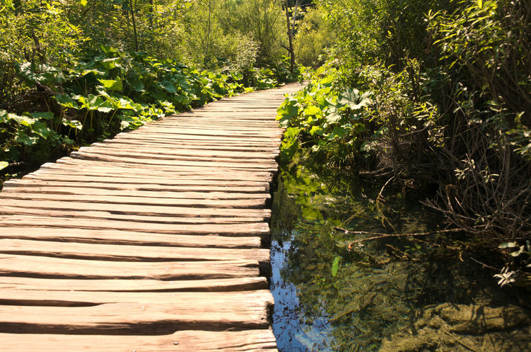 A walk in the park Absence Beauty In Nature Boardwalk Day Diminishing Perspective Empty Green Green Color Growth Lush Foliage Narrow National Park Nature No People Outdoors Plant Scenics The Way Forward Tranquil Scene Tranquility Tree Vanishing Point Walkway Wood - Material